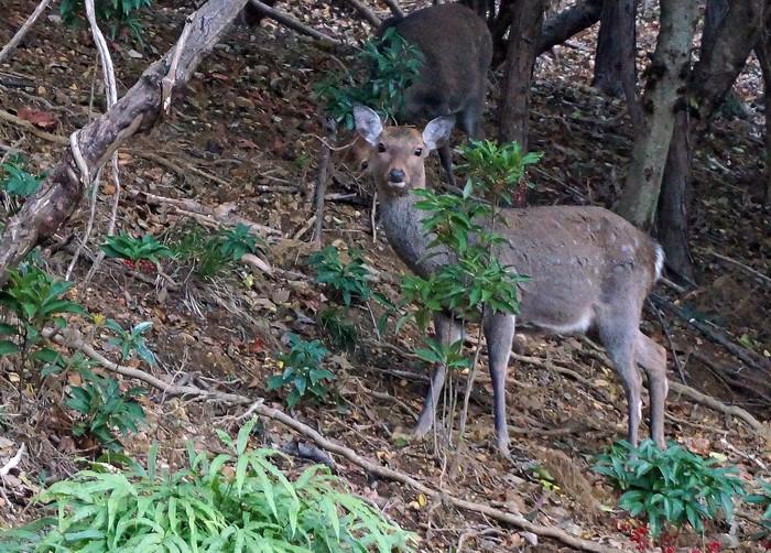 鹿の家族_e0016894_8572288.jpg