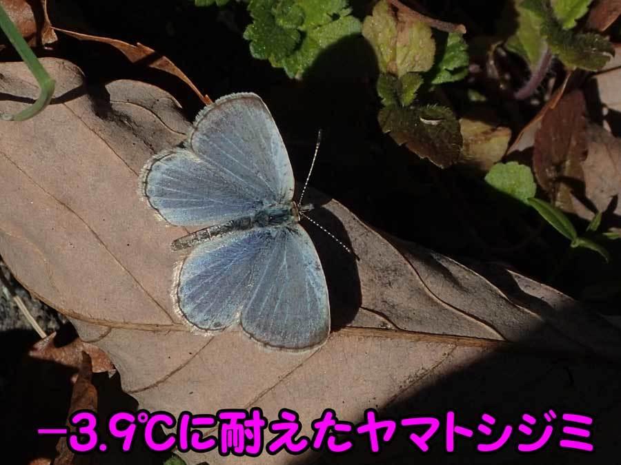 e0253104_22442209.jpg