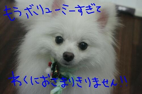 b0130018_15562837.jpg