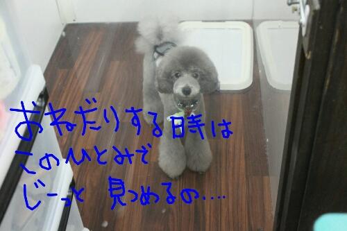 b0130018_162646100.jpg