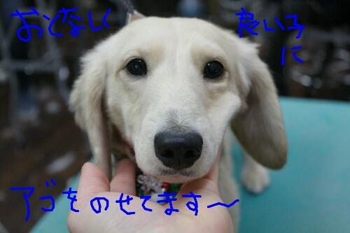 b0130018_16291870.jpg