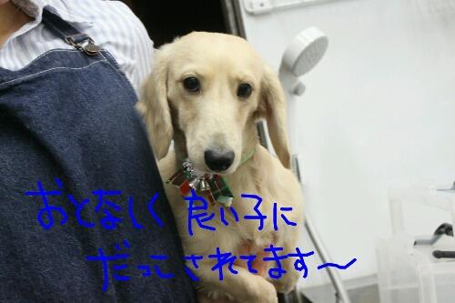 b0130018_16294666.jpg
