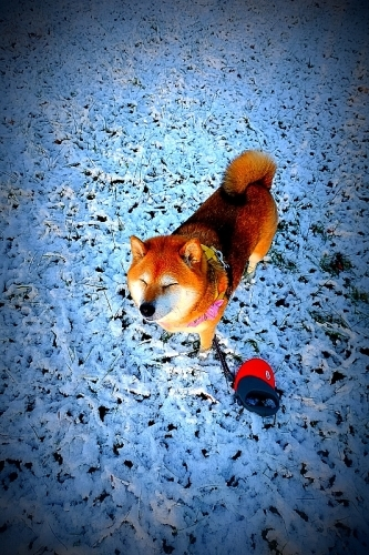 雪vs霜_b0314043_21324664.jpg