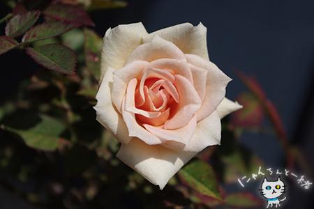 縞柊の甘い匂い_e0031853_2223049.jpg