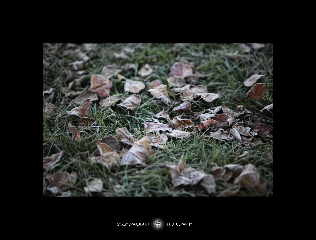 冬の朝_c0253556_5311697.jpg