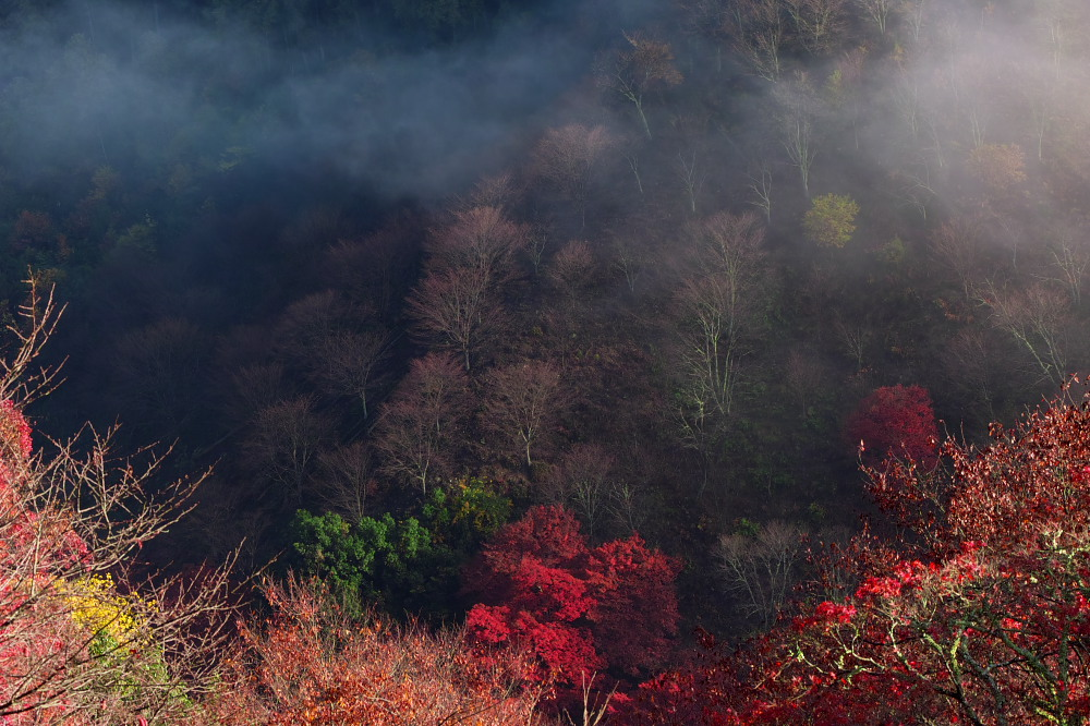 紅葉  2014    <吉野>                          _f0021869_23123021.jpg