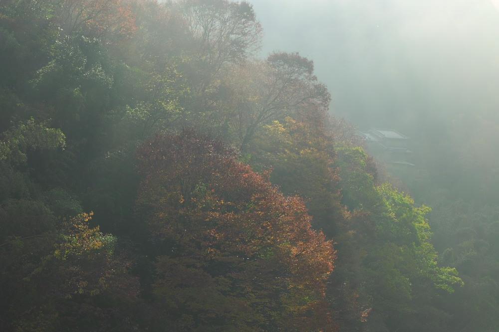 紅葉  2014    <吉野>                          _f0021869_23133374.jpg