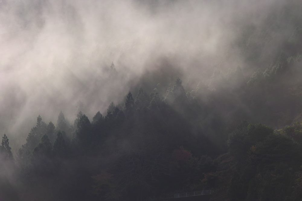 紅葉  2014    <吉野>                          _f0021869_23144024.jpg