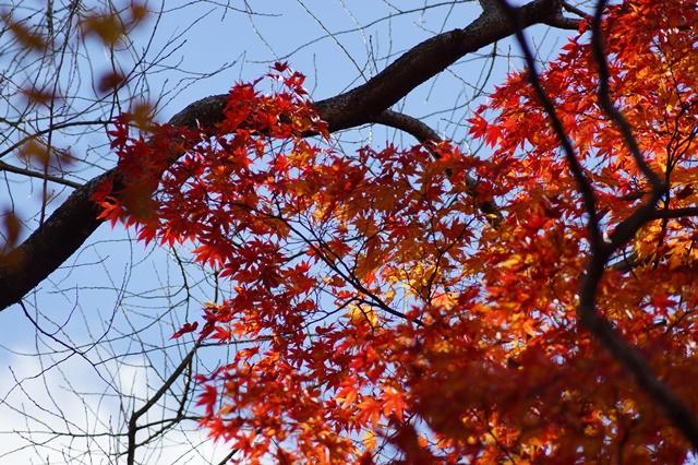 晩秋奈良の旅、奈良當麻寺の秋お寺と紅葉、日本一の紅葉を求めて藤田八束、當麻寺西南院の庭園の紅葉_d0181492_21171753.jpg