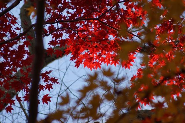 晩秋奈良の旅、奈良當麻寺の秋お寺と紅葉、日本一の紅葉を求めて藤田八束、當麻寺西南院の庭園の紅葉_d0181492_21174712.jpg
