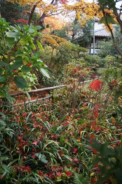 晩秋奈良の旅、奈良當麻寺の秋お寺と紅葉、日本一の紅葉を求めて藤田八束、當麻寺西南院の庭園の紅葉_d0181492_21202292.jpg