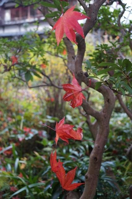 晩秋奈良の旅、奈良當麻寺の秋お寺と紅葉、日本一の紅葉を求めて藤田八束、當麻寺西南院の庭園の紅葉_d0181492_21204055.jpg