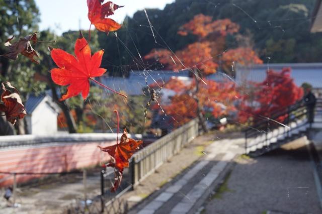 當麻寺奥院の秋 浄土庭園 浄土の世界を満喫_d0181492_21324745.jpg