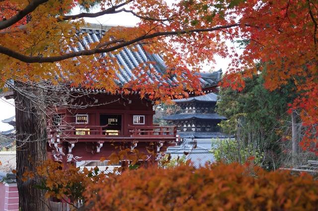 當麻寺奥院の秋 浄土庭園 浄土の世界を満喫_d0181492_21422067.jpg