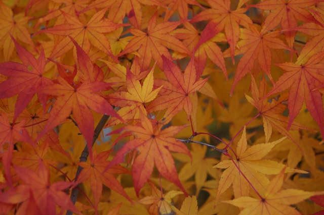 當麻寺奥院の秋 浄土庭園 浄土の世界を満喫_d0181492_21423829.jpg
