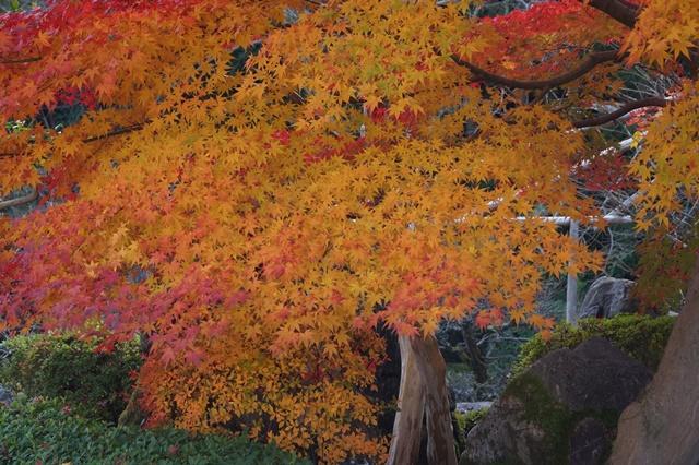 當麻寺奥院の秋 浄土庭園 浄土の世界を満喫_d0181492_21425949.jpg