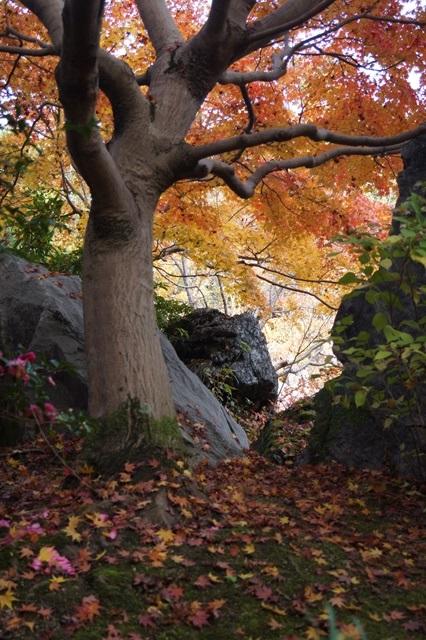 當麻寺奥院の秋 浄土庭園 浄土の世界を満喫_d0181492_2145386.jpg