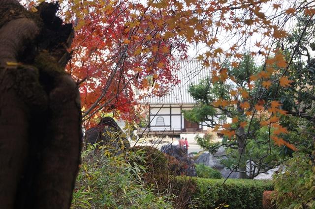 當麻寺奥院の秋 浄土庭園 浄土の世界を満喫_d0181492_21455736.jpg