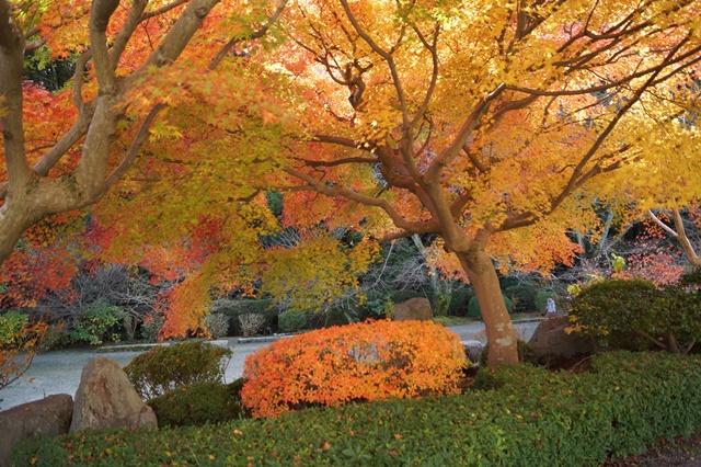 當麻寺奥院の秋 浄土庭園 浄土の世界を満喫_d0181492_21462935.jpg