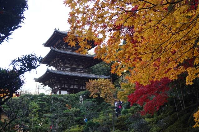 驚愕!!當麻寺西南院の素晴らしい紅葉と庭園、奈良の秋素晴らしい美しさに逢う旅_d0181492_220294.jpg