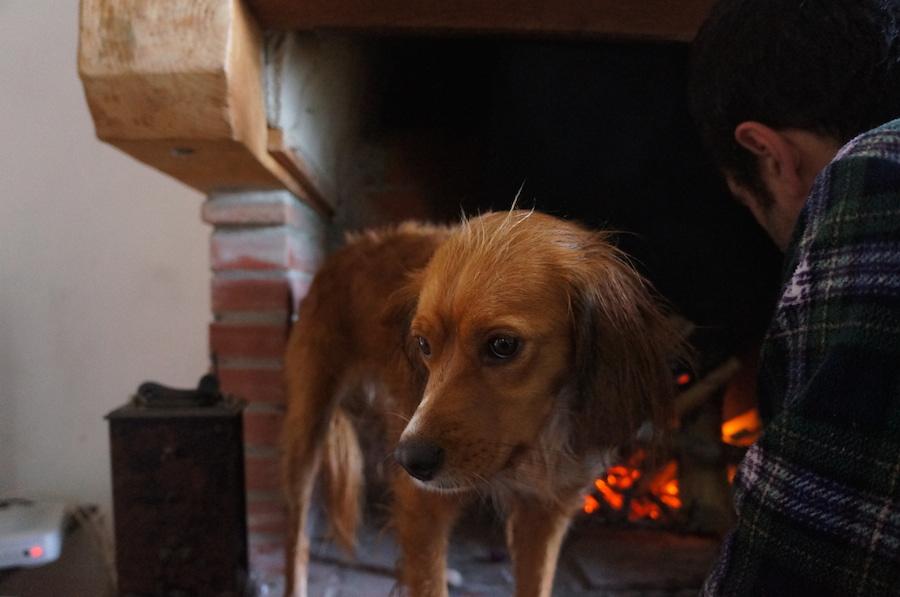 日曜日の午後は暖炉の前で_f0106597_215261.jpg