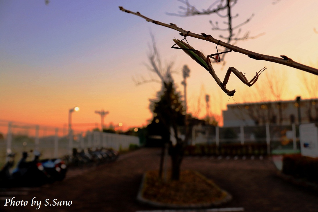 虫の季節が終わる…。_b0348205_23340140.jpg