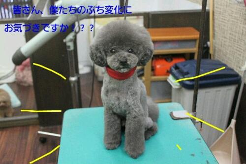 安室ちゃん_b0130018_12554373.jpg