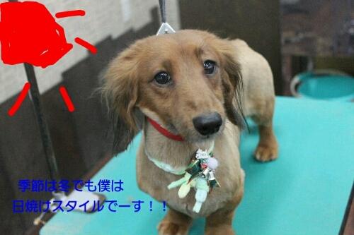 安室ちゃん_b0130018_12593827.jpg