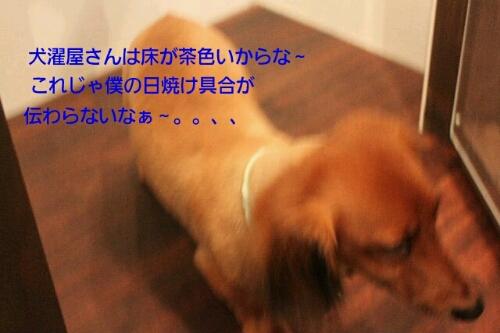 安室ちゃん_b0130018_1301425.jpg
