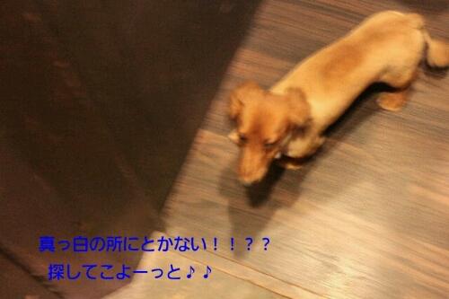 安室ちゃん_b0130018_1303885.jpg