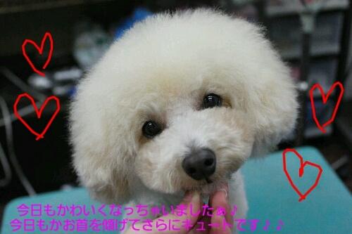 安室ちゃん_b0130018_13534797.jpg