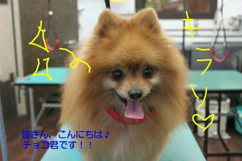 安室ちゃん_b0130018_13564411.jpg