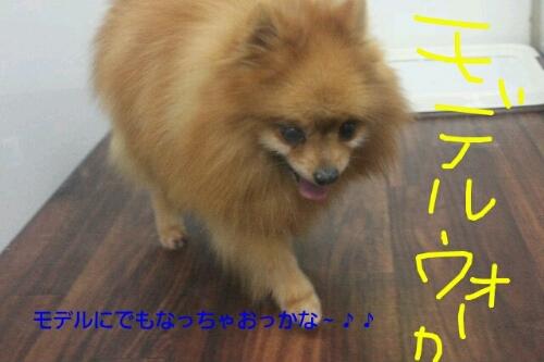 安室ちゃん_b0130018_13574223.jpg