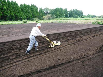 菊池水源里山ニンジン 無農薬・無化学肥料のニンジン発送をスタートします。_a0254656_18202837.jpg