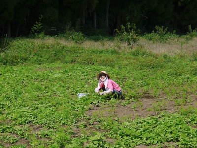 菊池水源里山ニンジン 無農薬・無化学肥料のニンジン発送をスタートします。_a0254656_18343331.jpg
