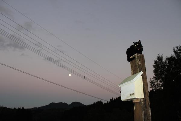 月の女神様とキラ☆_a0174458_0143088.jpg