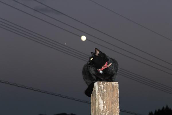 月の女神様とキラ☆_a0174458_0195718.jpg