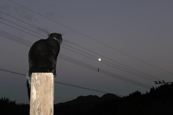 月の女神様とキラ☆_a0174458_034230.jpg