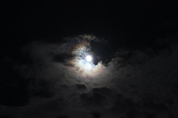 月の女神様とキラ☆_a0174458_103135.jpg