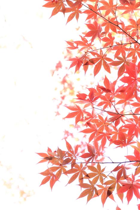 ■■ 静かなる うつろひ ~青と赤~ ■■_c0195662_22432633.jpg