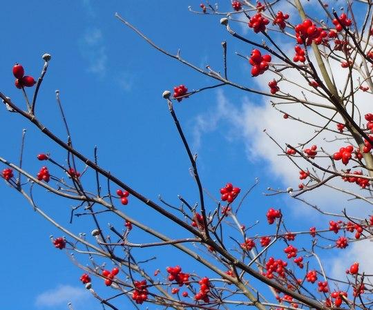 路傍の花、樹々の鳥(55) ~ まだまだ遠い春への準備 ~_b0102572_1575160.jpg
