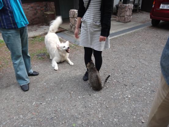 不思議な猫の物語(ホスト猫となるー犬とのツーショット編5)_f0064906_14114714.jpg