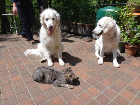不思議な猫の物語(ホスト猫となるー犬とのツーショット編5)_f0064906_14115917.jpg