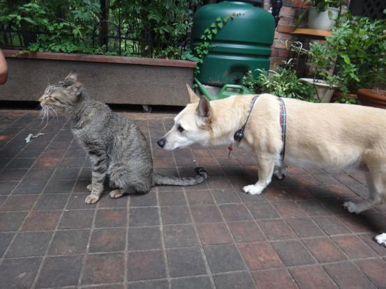不思議な猫の物語(ホスト猫となるー犬とのツーショット編5)_f0064906_1412573.jpg