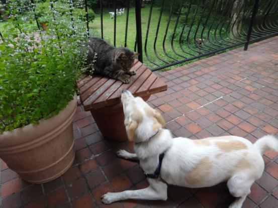 不思議な猫の物語(ホスト猫となるー犬とのツーショット編5)_f0064906_14132272.jpg
