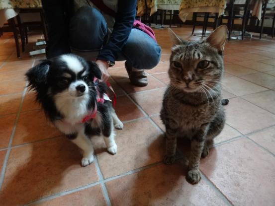 不思議な猫の物語(ホスト猫となるー犬とのツーショット編5)_f0064906_1413988.jpg