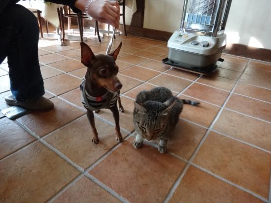 不思議な猫の物語(ホスト猫となるー犬とのツーショット編5)_f0064906_14143178.jpg