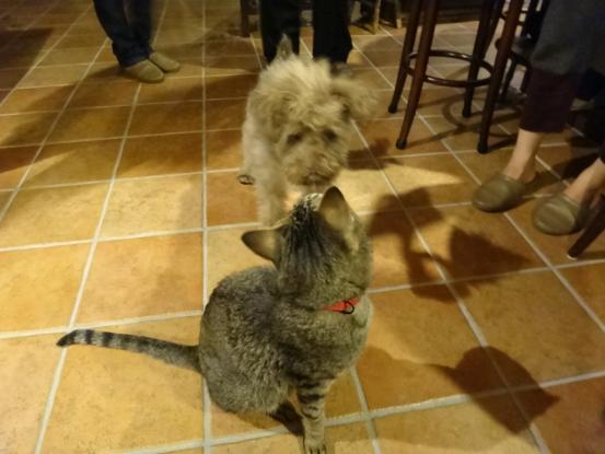 不思議な猫の物語(ホスト猫となるー犬とのツーショット編5)_f0064906_14144289.jpg