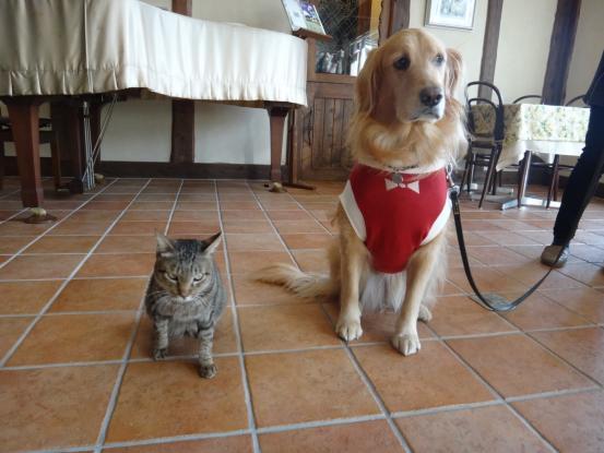 不思議な猫の物語(ホスト猫となるー犬とのツーショット編5)_f0064906_14145495.jpg