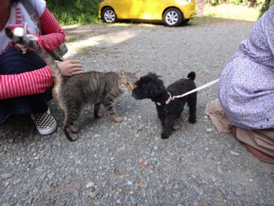 不思議な猫の物語(ホスト猫となるー犬とのツーショット編5)_f0064906_1414827.jpg